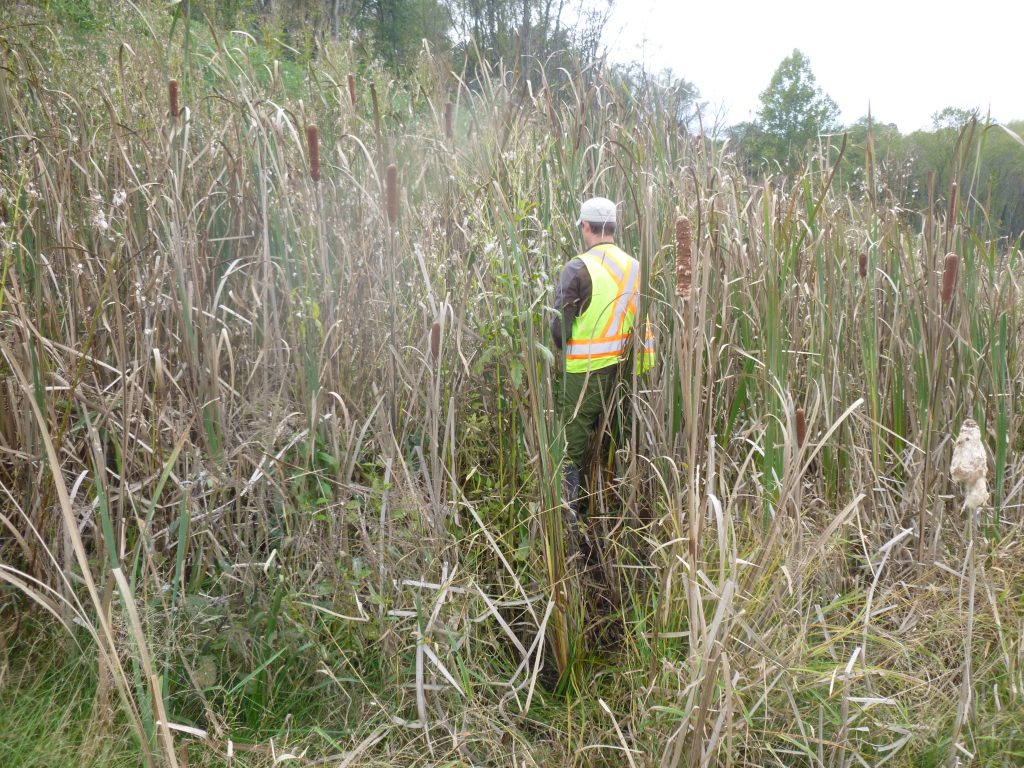 Wetland Delineation